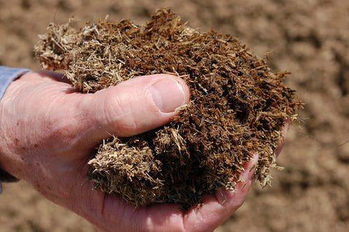 Как правильно удобрять капусту в открытом грунте