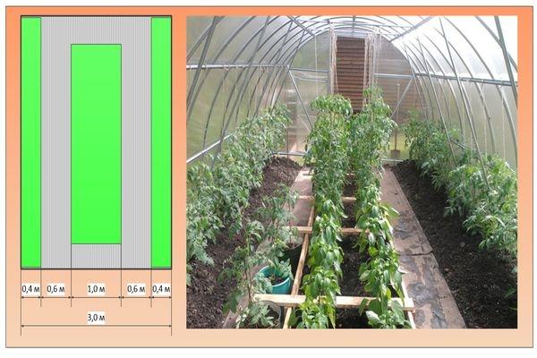 Сколько помидоров можно вырастить в теплице 3 на 6