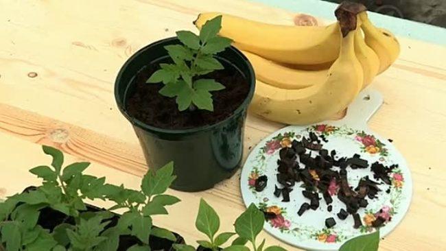 Питательное удобрение из банановой кожуры для рассады