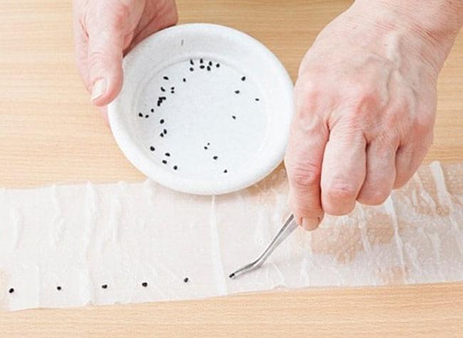 Технология безземельного выращивания рассады на туалетной бумаге