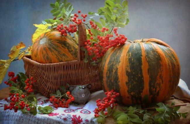 Лучшие сорта тыквы мускатного, твердокорого и крупноплодного вида