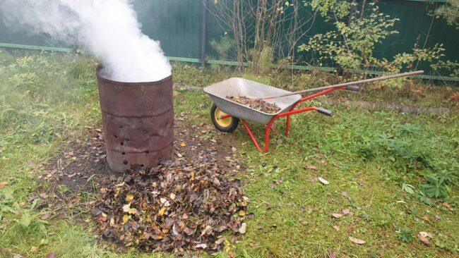 Сжигание опавших листьев с монилиозом