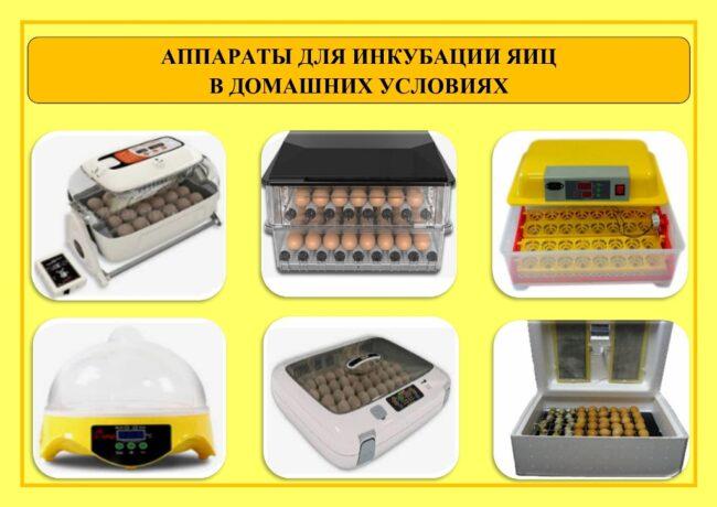 Аппараты для инкубации гусиных яиц в домашних условиях