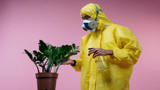 Обработка растения фунгицидом