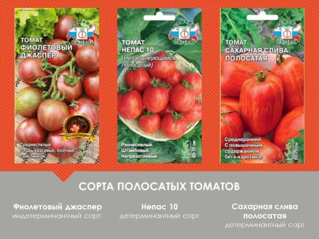 сорта помидоров в полоску