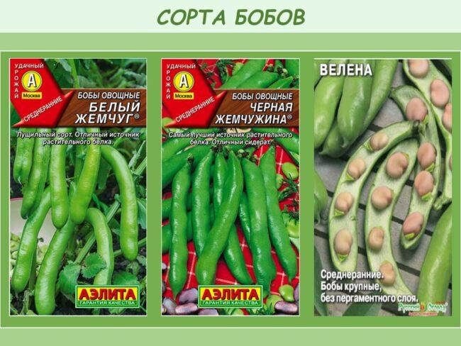 Популярные сорта бобов