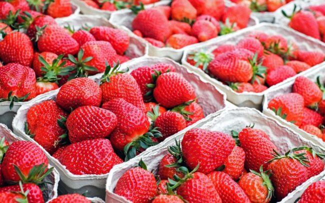 Хранение ягод в картонных контейнерах